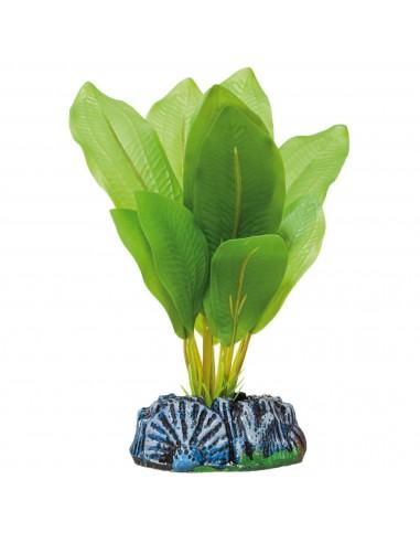 ica-planta-echinodorus-14-cm