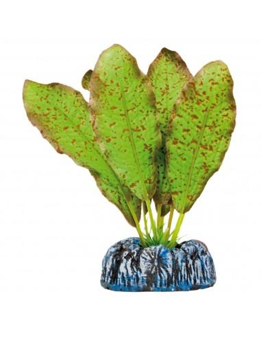 ica-planta-echinodorus-moteado-20-cm