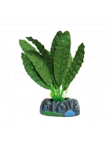 ica-planta-aponogeton-verde-11-cm