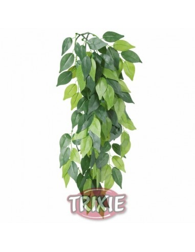 trx-planta-seda-colgante-terrarios-ficus