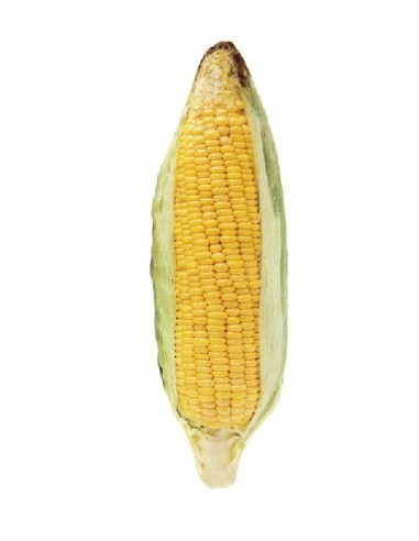 fb-matatabi-pina-millo