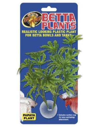 zm-betta-plant-papaya